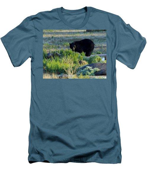 Bear 3 Men's T-Shirt (Athletic Fit)