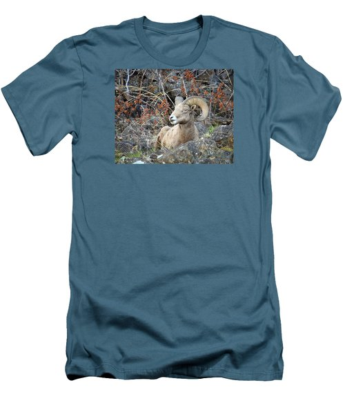 Men's T-Shirt (Slim Fit) featuring the photograph Bedded Bighorn by Steve McKinzie