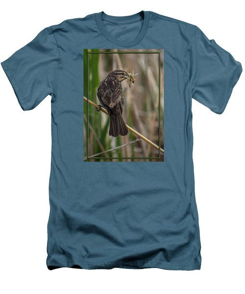 Men's T-Shirt (Slim Fit) featuring the photograph Big Dinner For Female Red Winged Blackbird II by Patti Deters
