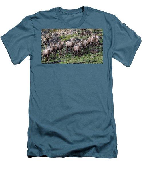 Men's T-Shirt (Slim Fit) featuring the photograph Bighorn Reunion by Steve McKinzie