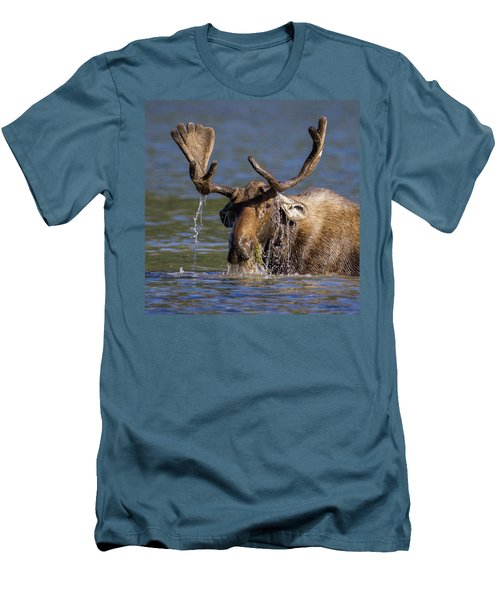 Bull Moose Sampling The Vegetation Men's T-Shirt (Slim Fit) by Jack Bell