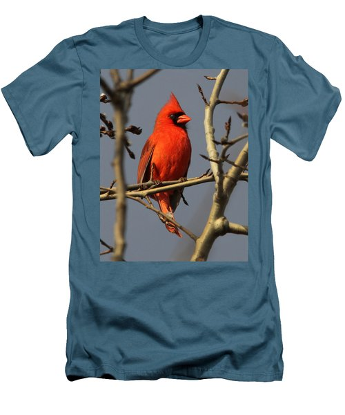 Cardinal Men's T-Shirt (Athletic Fit)