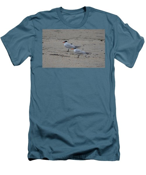 Men's T-Shirt (Slim Fit) featuring the photograph Caspian Tern Young And Adult by James Petersen