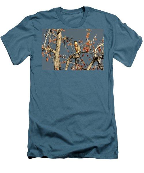 Cooper's Hawk Catches Sun In Stormy Sky Men's T-Shirt (Slim Fit) by Susan Wiedmann