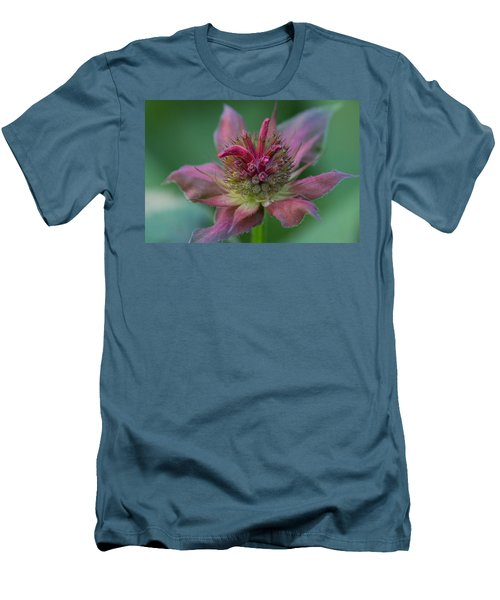 Early Spring Bee Balm Bud Men's T-Shirt (Athletic Fit)