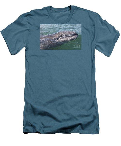 Gray / Grey Whale Eschrichtius Robustus Men's T-Shirt (Slim Fit) by Liz Leyden