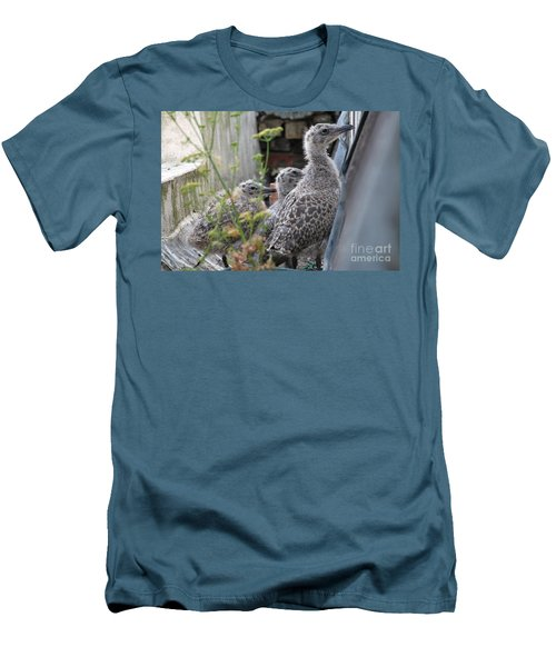 Herring Gull Chicks Men's T-Shirt (Athletic Fit)
