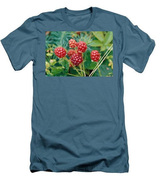 Highbush Blackberry Rubus Allegheniensis Grows Wild In Old Fields And At Roadsides Men's T-Shirt (Slim Fit) by Anonymous