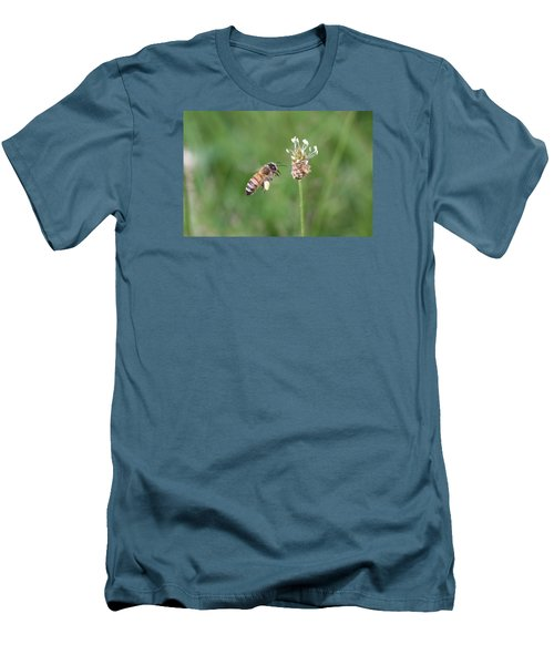 Honeybee And English Plantain Men's T-Shirt (Slim Fit) by Lucinda VanVleck