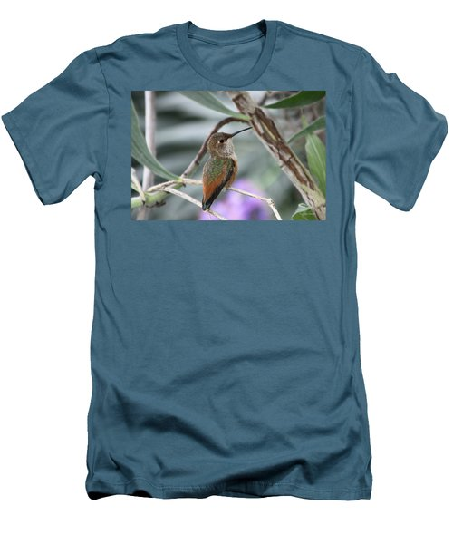 Hummingbird On A Branch Men's T-Shirt (Athletic Fit)