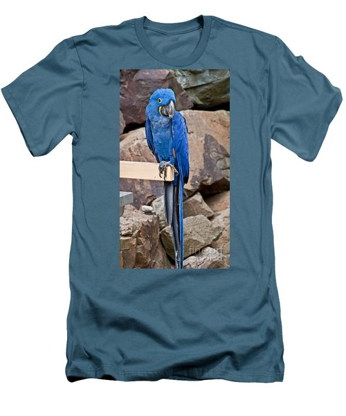 Hyacinth Macaw Parrot Bird Art Prints Men's T-Shirt (Athletic Fit)