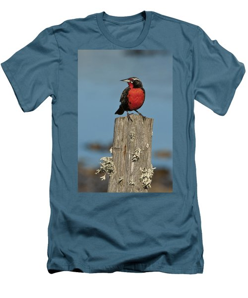 Male Long-tailed Meadowlark On Fencepost Men's T-Shirt (Athletic Fit)