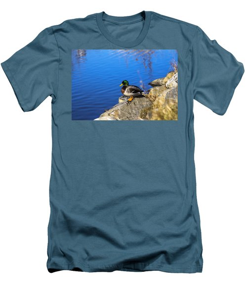 Mallard Looking Over His Domain Men's T-Shirt (Slim Fit)
