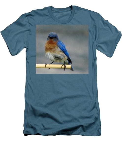 Our Own Mad Bluebird Men's T-Shirt (Slim Fit) by Betty Pieper