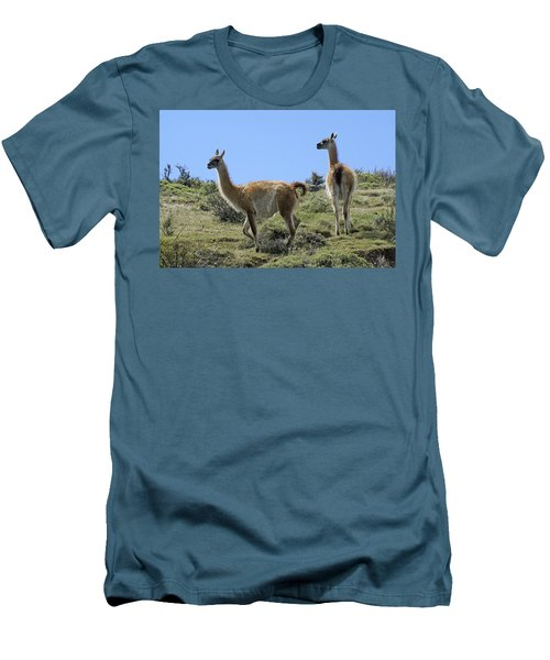 Patagonian Guanacos Men's T-Shirt (Slim Fit) by Michele Burgess