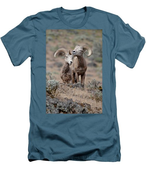 Men's T-Shirt (Slim Fit) featuring the photograph Playfull Rams by Athena Mckinzie