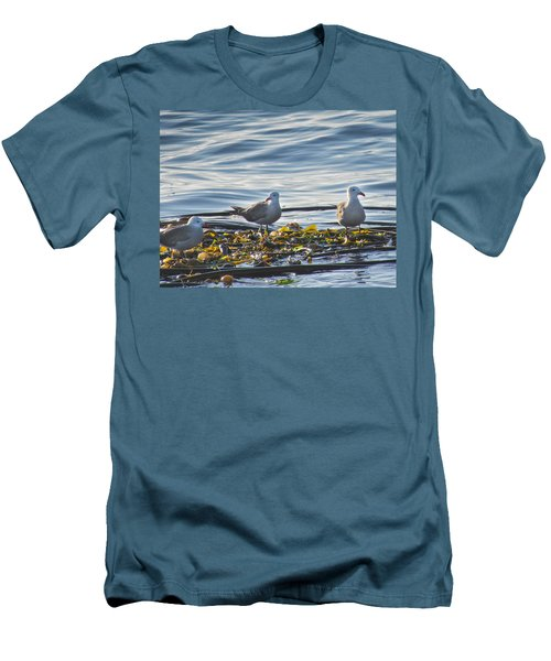 Seagulls In Victoria Bc Men's T-Shirt (Athletic Fit)