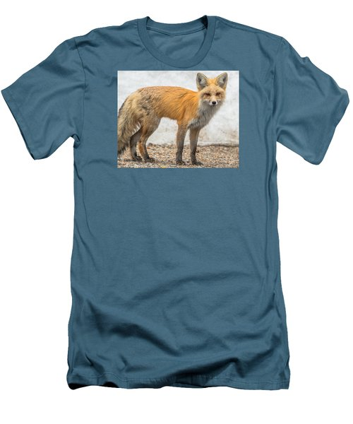 Smart Like A Fox Men's T-Shirt (Slim Fit) by Yeates Photography