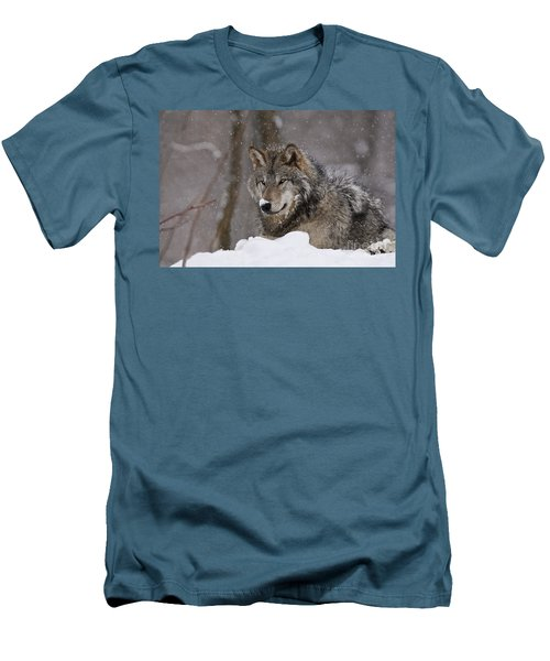 Snow Nose Men's T-Shirt (Slim Fit) by Wolves Only