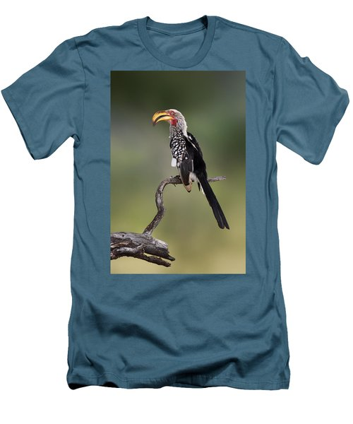 Southern Yellowbilled Hornbill Men's T-Shirt (Athletic Fit)