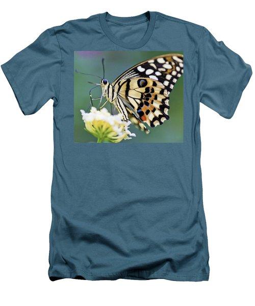 Swallowtail Butterfly Men's T-Shirt (Slim Fit) by Maj Seda