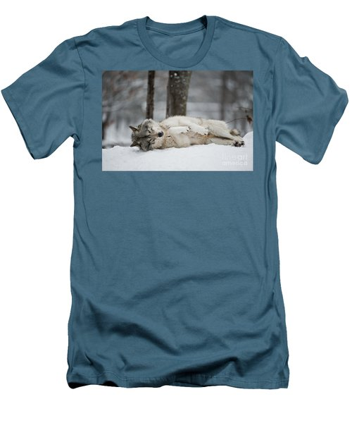 Timber Wolf In Winter Men's T-Shirt (Slim Fit) by Wolves Only
