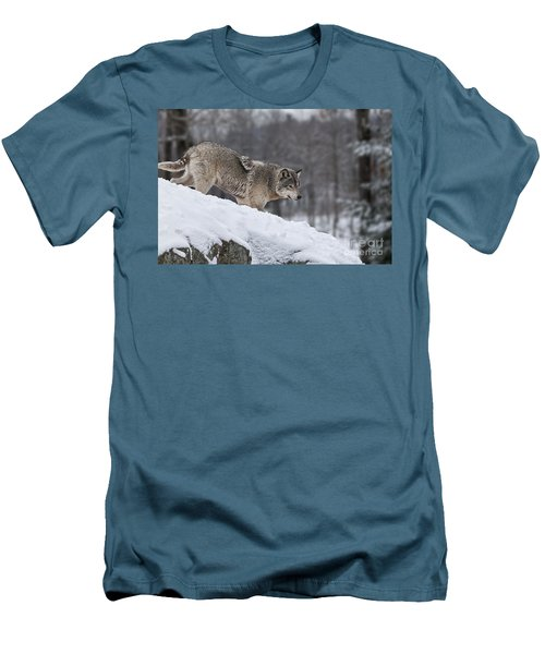 Men's T-Shirt (Slim Fit) featuring the photograph Timber Wolf On Hill by Wolves Only