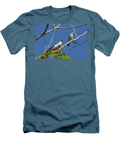 White-headed Starlings Havelock Isl Men's T-Shirt (Athletic Fit)