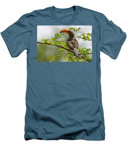 Yellow-billed Hornbill Men's T-Shirt (Athletic Fit)