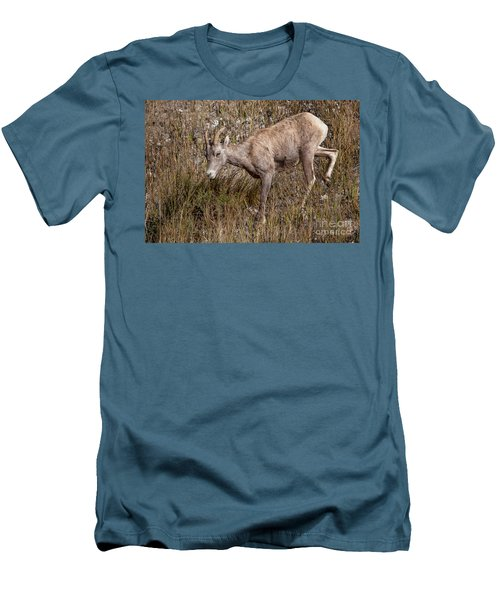 Bighorn Ewe Men's T-Shirt (Athletic Fit)