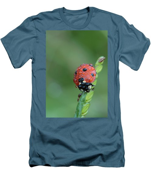 Seven-spotted Lady Beetle On Grass With Dew Men's T-Shirt (Athletic Fit)