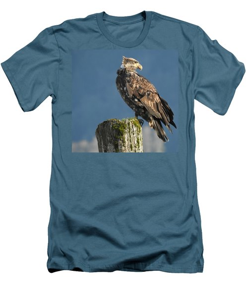 Immature Bald Eagle Men's T-Shirt (Slim Fit) by Brian Chase