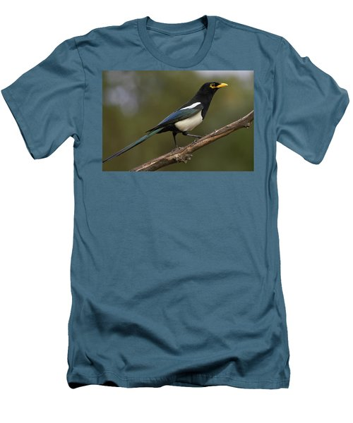 Yellow-billed Magpie Men's T-Shirt (Athletic Fit)