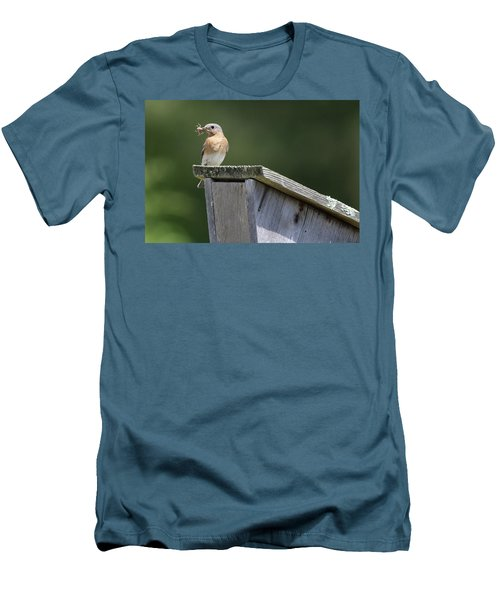 Eastern Bluebird Calverton New York Men's T-Shirt (Athletic Fit)