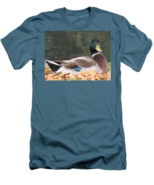 A Handsome Mallard Men's T-Shirt (Athletic Fit)