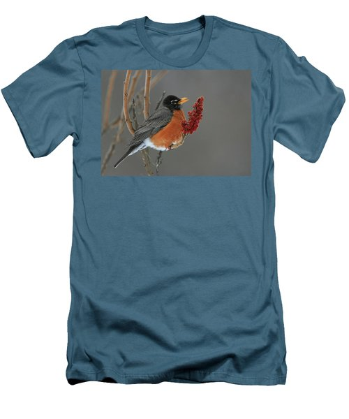 American Robin On Sumac Men's T-Shirt (Athletic Fit)