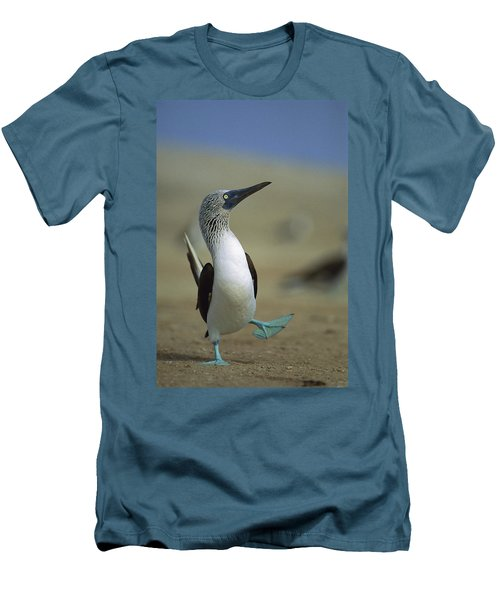 Blue-footed Booby Sula Nebouxii Men's T-Shirt (Slim Fit) by Tui De Roy