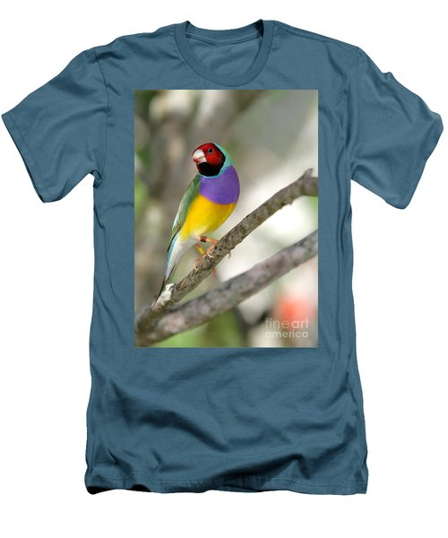 Colorful Gouldian Finch Men's T-Shirt (Athletic Fit)