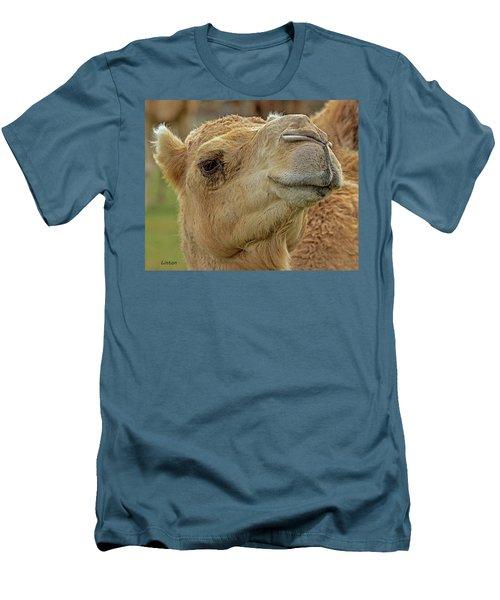 Dromedary Or Arabian Camel Men's T-Shirt (Athletic Fit)