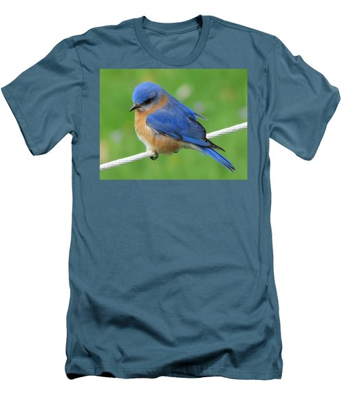 Intense Blue Bird Men's T-Shirt (Athletic Fit)
