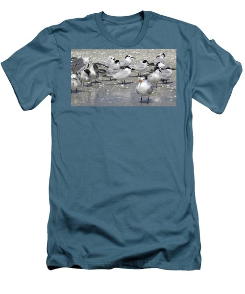 Least Terns Men's T-Shirt (Slim Fit) by Melinda Saminski