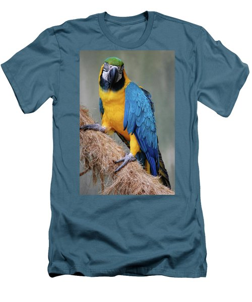 Magnificent Macaw Men's T-Shirt (Slim Fit) by DigiArt Diaries by Vicky B Fuller