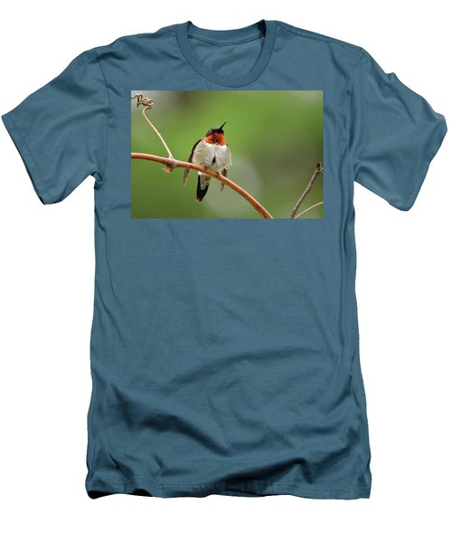 Male Ruby Throated Hummingbird Men's T-Shirt (Athletic Fit)