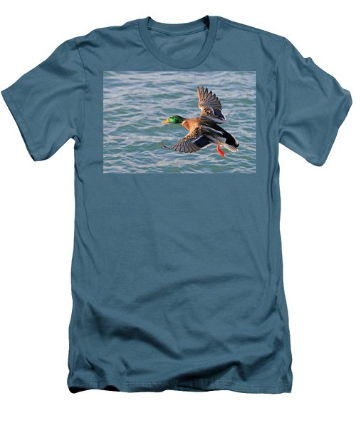 Mallard In Flight 3 Men's T-Shirt (Athletic Fit)