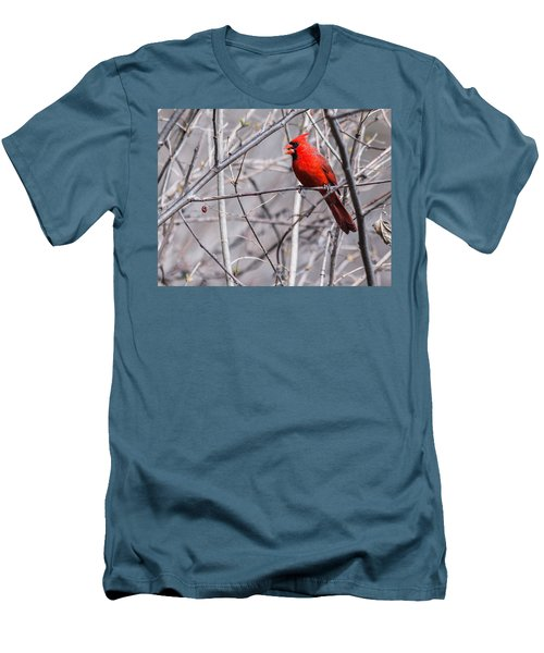 Northern Cardinal Feeding Men's T-Shirt (Slim Fit) by Edward Peterson