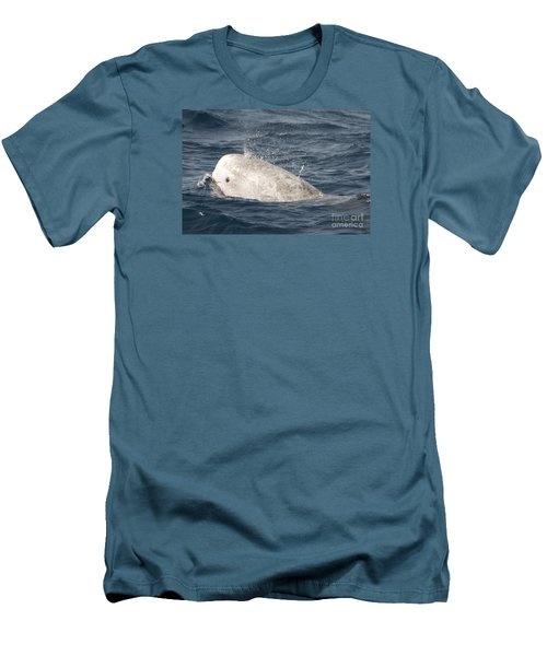 Risso Dolphin Men's T-Shirt (Athletic Fit)