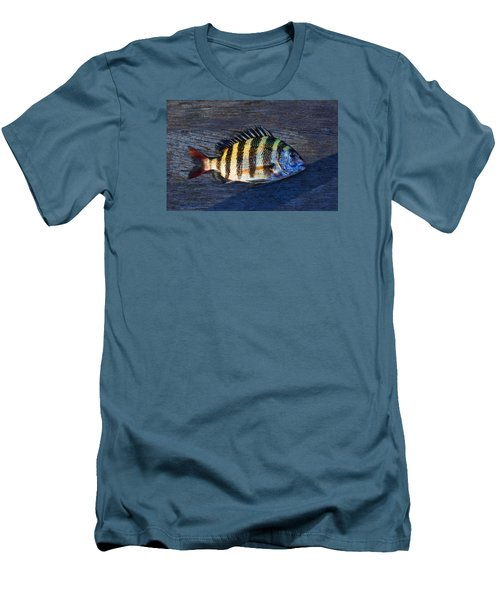 Men's T-Shirt (Slim Fit) featuring the photograph Sheepshead Fish by Laura Fasulo