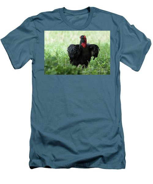 Southern Ground Hornbill Eating An Insect In Tarangire Men's T-Shirt (Athletic Fit)