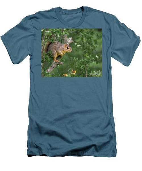 Squirrel In A Tree Men's T-Shirt (Athletic Fit)