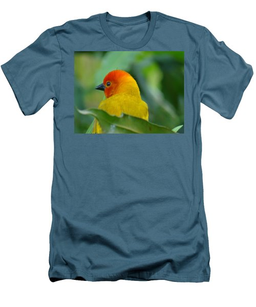 Through A Child's Eyes - Close Up Yellow And Orange Bird 2 Men's T-Shirt (Slim Fit) by Exploramum Exploramum
